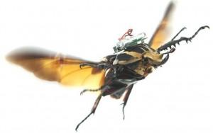 Dronepedia bio drones